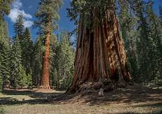 eqoi7a what do sequoia national park a photography workshop and