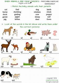 baby animals names worksheet baby animals worksheets driverlayer search engine
