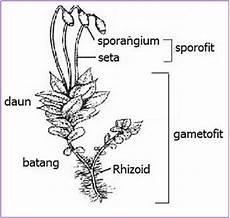 Plantae Tumbuhan Lumut