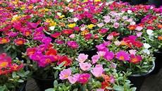 24 pflanzen die viel sonne vertragen und wenig wasser