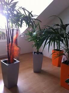 Pflanzen Günstig - g 252 nstig pflanzen zu verkaufen 812720