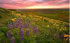 flower valley hd wallpaper valley of flowers hd wallpaper background images