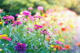 View Landscaping Flowers Free Background Images Nature