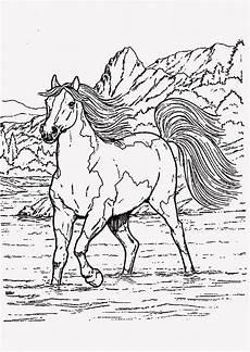 ausmalbilder pferde turnier inspirierend janbleil die