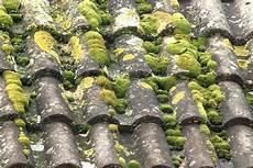 mousse sur le toit traitement anti mousse pour toiture