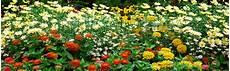 paesaggi fioriti photographer foto fiori paesaggi fioriti n 9