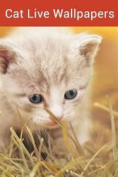 Gold Home Screen Cat Wallpaper