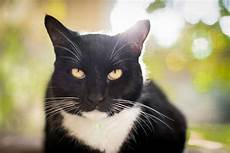 was bedeuten die verschiedenen gesichtsausdr 252 cke der katze