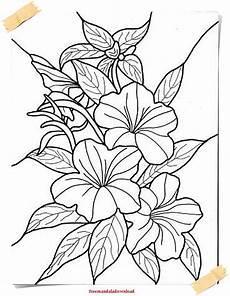 Blumen Ausmalbilder Erwachsene Malvorlagen F 252 R Erwachsene Blumen Und Pflanzen Flowers