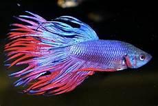Comment Se Passe La Reproduction En Aquariophilie