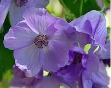 piante di fiori tipi di fiori fiori di piante caratteristiche dei tipi