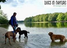 Ausgehservice In Berlin Hunde Hof Wald Wiese