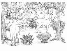 Bilder Zum Ausmalen Wald Coloring Page Deer Woodland Forest Deer In The Dell Wall