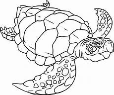 Turtle Coloring Sheet Get This Easy Turtle Coloring Pages For Preschoolers 9iz28