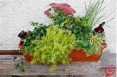 fiori invernali per balconi composizioni floreali per le fioriere invernali