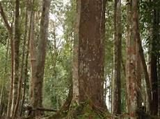 Strategi Pengembangan Hasil Hutan Non Kayu Berbasis