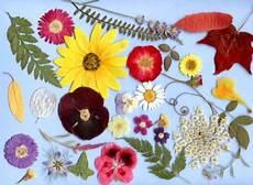 dove si comprano i fiori di bach rimedi naturali per la cura degli animali i fiori di