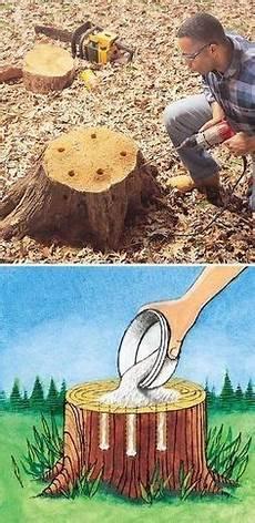 Baumstumpf Entfernung Mit Bittersalz Gartendeko