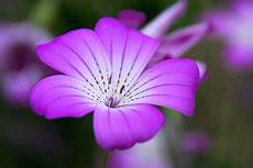 fiore flowers flower violet floral 183 free photo on pixabay