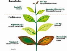 manque de magnésium oeil carences en 233 l 233 ments nutritifs dans les syst 232 mes