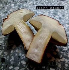 kulinarikus pilze sammeln teil 3 die putzarbeit und das