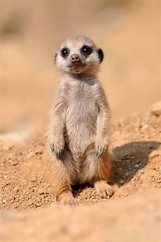 30 cute baby animals 30 pics amazing creatures