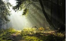 Kumpulan Gambar Hutan Yang Indah Dan Asri