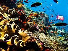 Blogganeh Pemandangan Bawah Laut Yang Indah