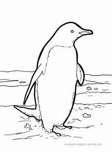 Ausmalbilder Tiere Pinguin Malvorlage Pinguin Tiere Kostenlose Ausmalbilder