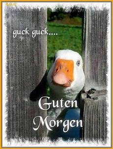 1497 best guten morgen images on and