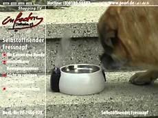 Katzenfressnapf Mit Deckel - infactory selbst 246 ffnender fressnapf f 252 r katzen kleine