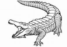 ausmalbilder f 252 r kinder krokodil 19