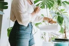 Vertrocknete Pflanzen Retten - bild der frau gesundheit liebe abnehmen mode und