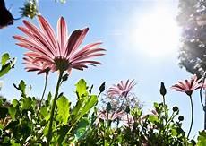 fiore flowers fiore nome