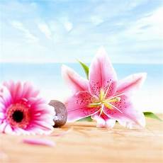 Beautiful Flower Wallpaper Zedge by 17 Best Images About Zedge Stuff On Butterfly