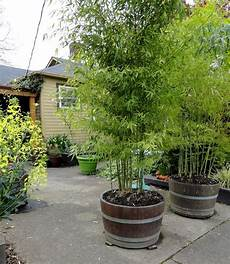 Useful Tips For Growing Bamboo Plants In Pots
