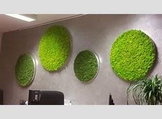 Moss Pictures   Moss Wall Design   Moss Walls and Moss