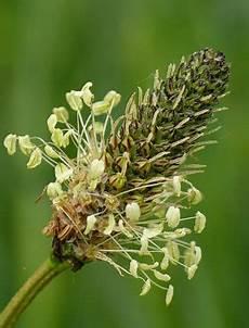 hausmittel gegen mehltau bei kr 228 utern und pflanzen
