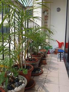 hohe pflanzen als sichtschutz als sichtschutz eignen sich auch hohe pflanzen garten