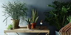 Pflanzen Zu Hause - 5 no kill houseplants for any home huffpost