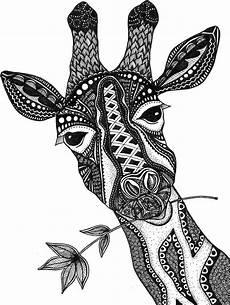 Ausmalbilder Erwachsene Giraffe Black And White Giraffe Drawing At Getdrawings Free