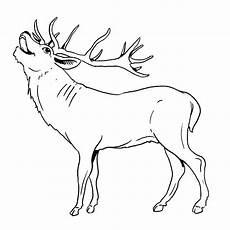 Ausmalbilder Zum Ausdrucken Reh Malvorlagen Hirsche Und Rehe Suche Ausmalbilder