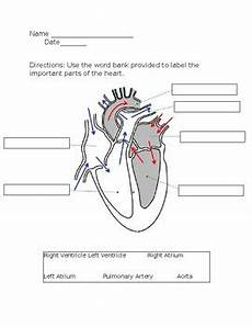 heart labeling worksheet by paul c teachers pay teachers