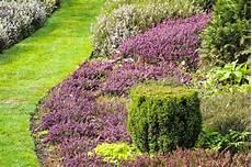 couvre sol sans entretien les meilleures plantes pour des bordures sans entretien