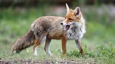 heimische waldbewohner tiere im wald tierwelt natur