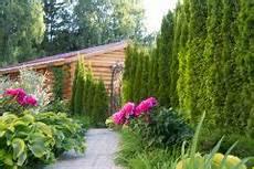 welche pflanzen passen zu thuja pflanzen 187 welcher abstand ist einzuhalten lebensbaum