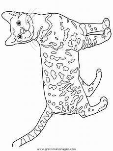 Katzen Malvorlagen Instagram 2052 Besten Cats Bilder Auf Katzen K 228 Tzchen