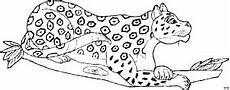 jaguar 3 ausmalbild malvorlage tiere
