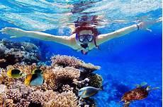 lovina and menjangan snorkeling bali tour wandernesia