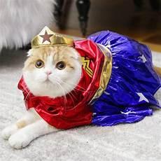 Kumpulan Gambar Kucing Lucu Dan Imut Helmi